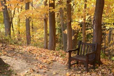 benchwoods