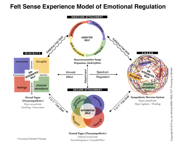 Arousal, Behavior, Stress, and Affect Worksheet Essay Sample